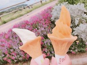 ソフトクリーム びわとバニラ